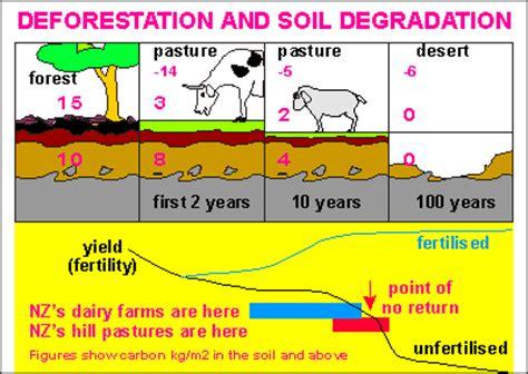 deforestation diagram soil ecology