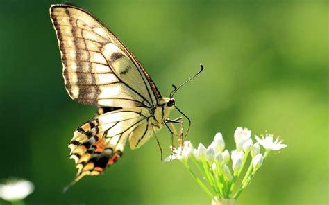 imagenes de mariposas image gallery imagenes de una mariposa