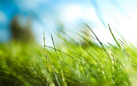 wallpaper background grass nature wallpapers hd landscape pictures one hd wallpaper