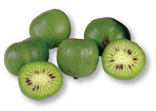k fruit inc baby kiwifruit frieda s inc the specialty produce company