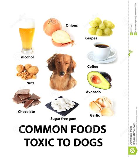 what foods are toxic to dogs foods toxic to dogs stock photo image 62751443