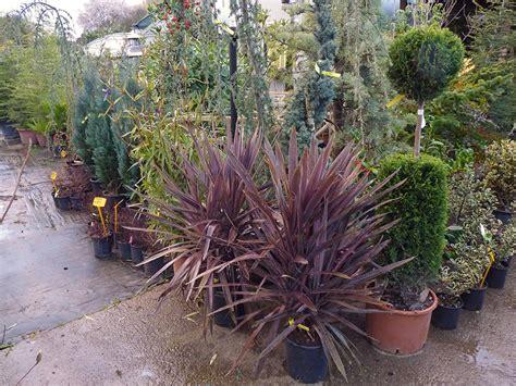 arbusti da terrazzo cespugli ed arbusti da esterno vivaio golfo