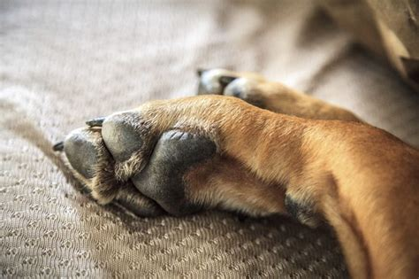 why dogs paws why does my paw at my cuteness