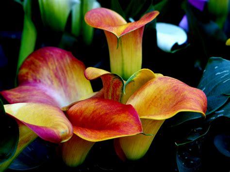 pflanzen november november blumen foto bild pflanzen pilze flechten