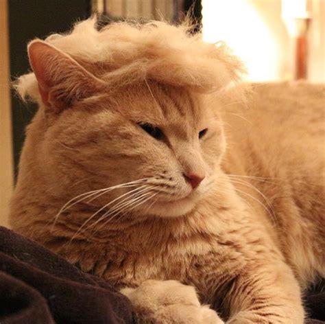 cat instagram instagram trumpyourcat donald cats ivikivi