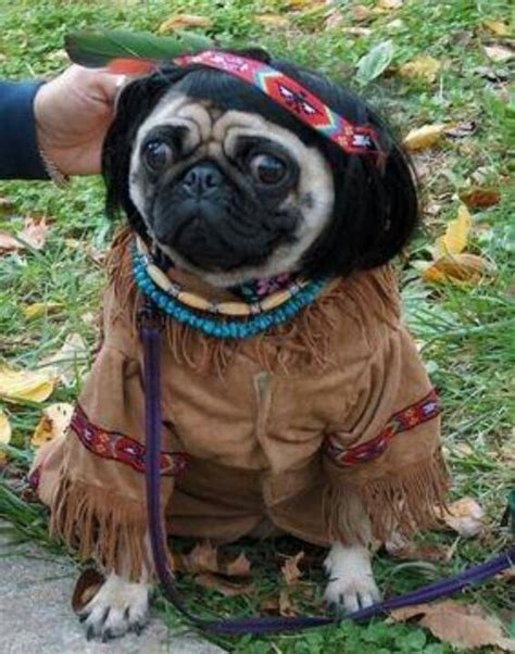 pug yoda costume for sale pocahontas pug pugs pic pug and pocahontas