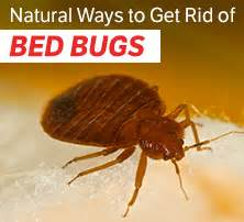 natural way to get rid of bed bugs are you carrying dangerous fat around your midsection