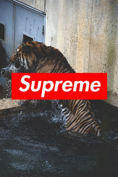 supreme wallpaper wallpapersafari