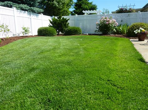 backyard flooring landscaping free images nature grass plant lawn home walkway
