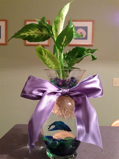 Betta Fish Vase by Pin Betta Fish Vase On