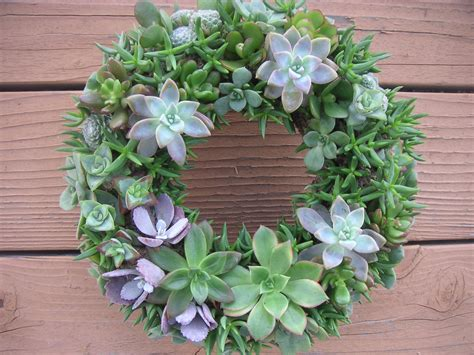 Design Ideas For A Small Kitchen flower succulent wreath best design succulent wreath for