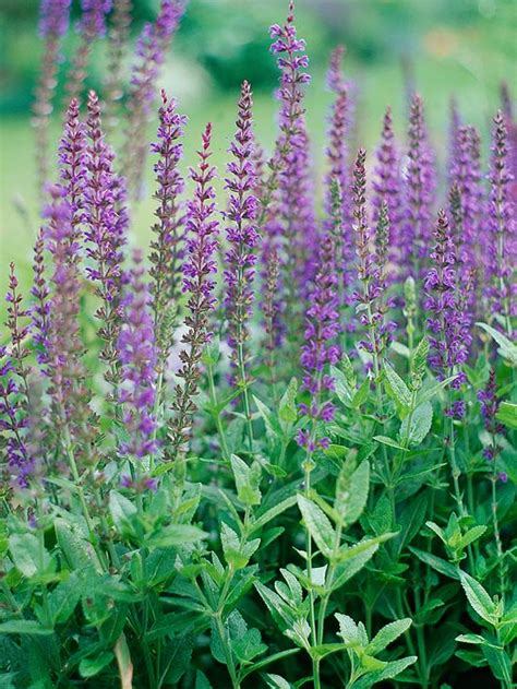 rabbit resistant plants home tips and more