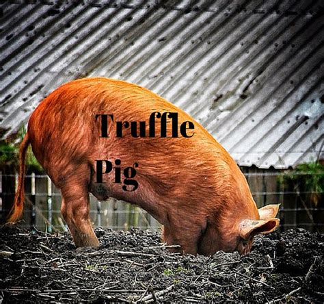 a piglet called truffle 0857637738 snapchat wpp and daily mail team up to launch native advertising agency native advertising