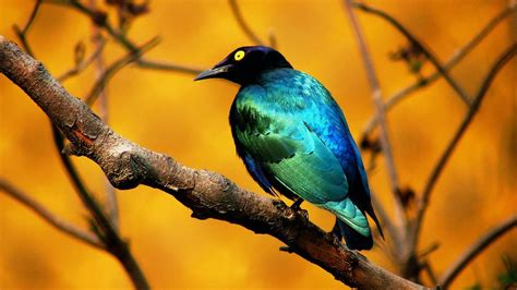 wallpaper birds animals zoo park birds desktop wallpapers bird beautiful