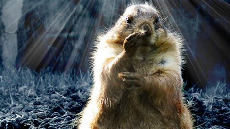 groundhog day will come groundhog day has roots in astronomy astronomy