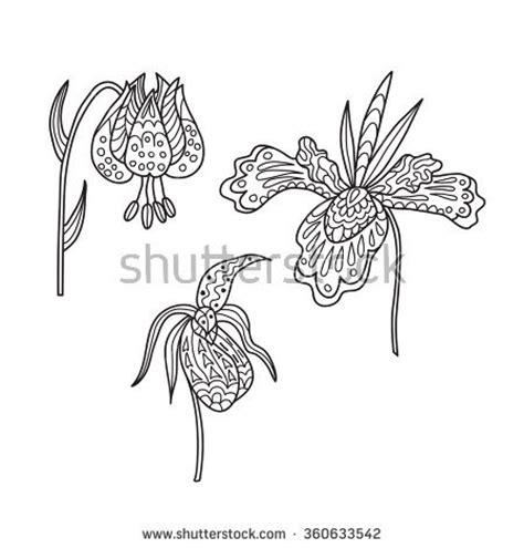 starburst coloring page starburst lily flower coloring pages geometric coloring pages