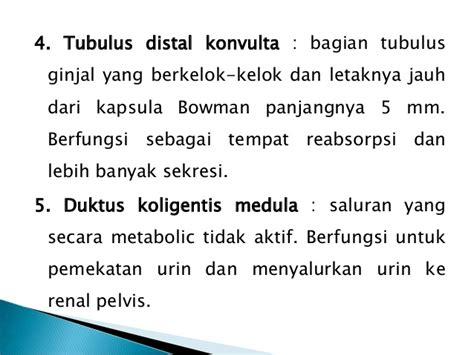 Janin Oblik Anatomi Dan Fisiologi Sistem Perkemihan