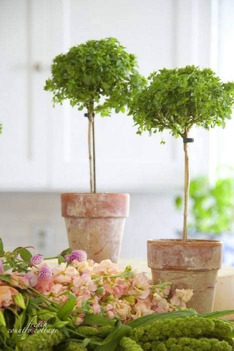 country table ls 24 best topiary wedding centerpiece images on