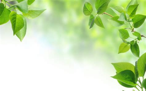 wallpaper green leaves on white background green leaves wallpaper background hq free download 2200