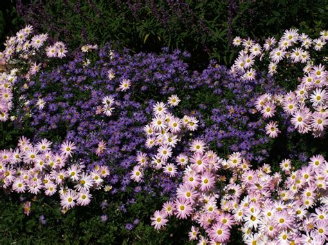 fall bloomers for the garden east texas gardening