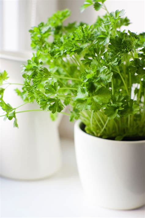 indoor herbs 567 best household cuteness images on pinterest