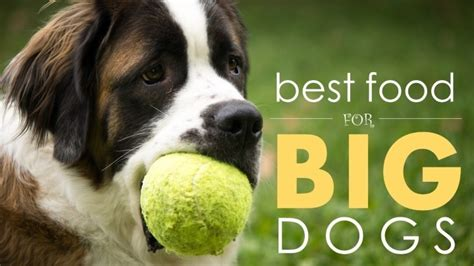 best food for large breed puppies the 4 best large breed foods reviews details