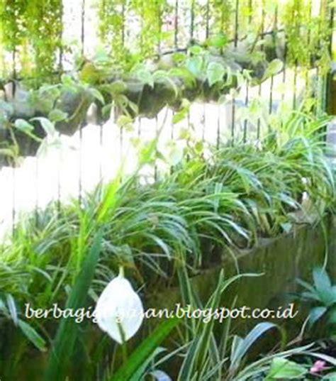 Obeng Bunga berbagi gagasan menghias rumah kecil dengan tanaman hias