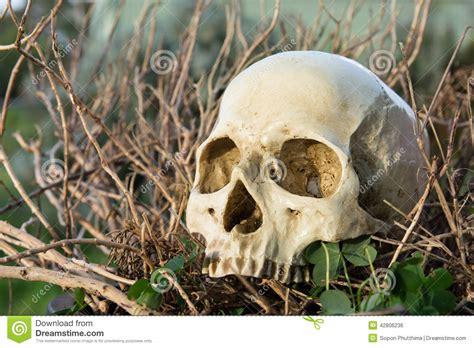 backyard skulls human skull in the bush stock photo image 42806236