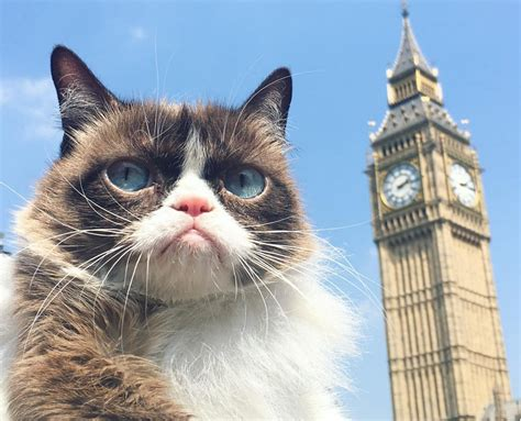 the cat in the grumpy cat tours london says meh ow life with cats