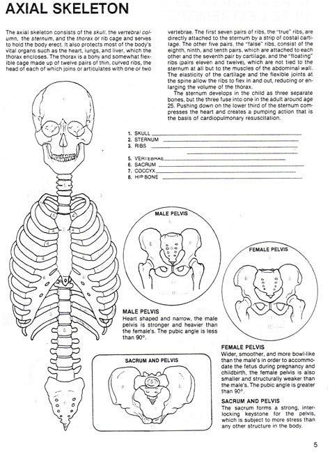 Axial Skeleton Worksheet Answers by Human Growth Development South Junior High School