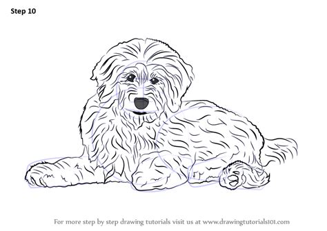 doodle dogs drawing learn how to draw a goldendoodle dogs step by step