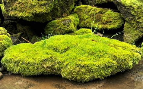 bleona new photos in high quality hd 2015 moss new awesome hd wallpapers 2015 high quality all