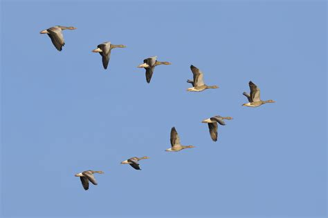 cradle of forestry to celebrate migratory bird day the