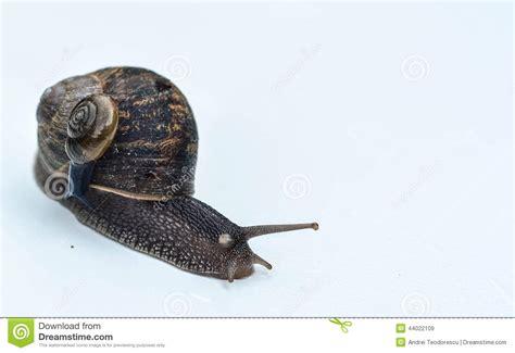 Dust Snail Green snails stock photo image 44022109