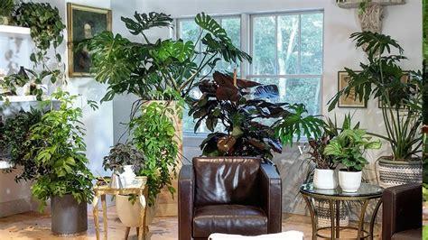houseplant   explore  favorite indoor plants