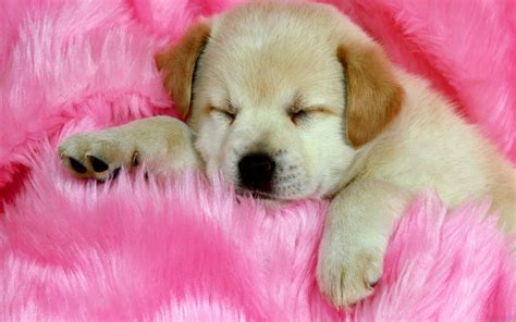 images of cute dog wallpaper 20 cute dog wallpapers blogoftheworld