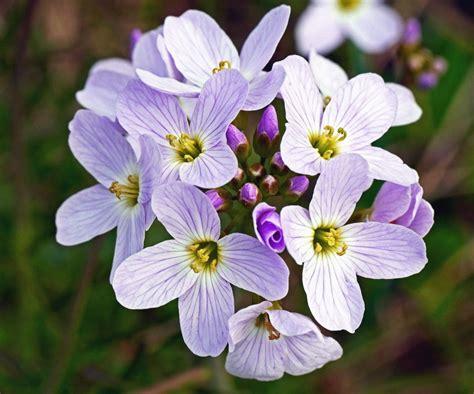 fiore pistillo foto gratis fiore pianta fiore petalo pistillo