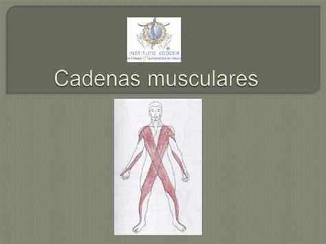 cadenas musculares miembro superior pdf cadenas musculares