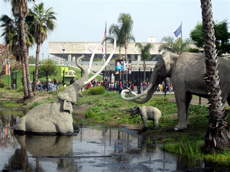 miss history travels to la tar pits museum books hasty pics la tar pits page museum los angeles