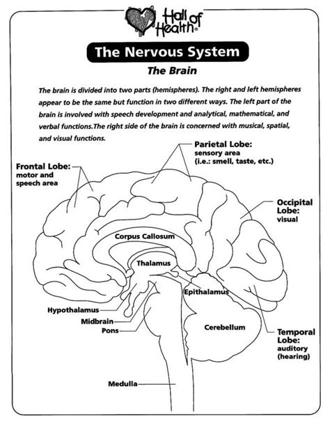 brain coloring page pdf nervous system the brain coloring page coloring home