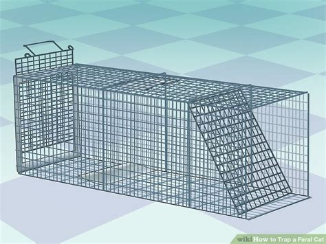 Pancing Garong How To Trap A Feral Cat 14 Steps With Pictures Wikihow