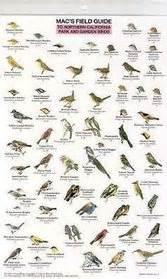 macs field guide northern california park garden birds