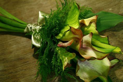 Kalung Korea Mori The Original Landscape Leaf 10 aloha florist sacramento