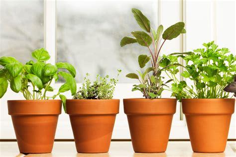 vasi per erbe aromatiche vasi per erbe aromatiche coltivare erbe aromatiche