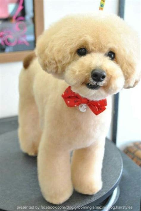 Asian Cuts For Dogs | 134 best images about asian dog grooming on pinterest