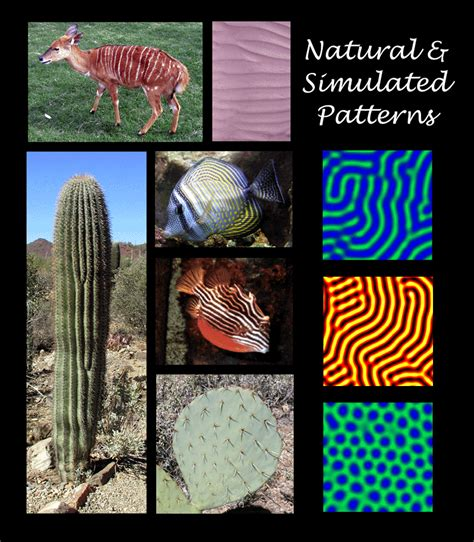 pattern formation in nature pdf pattern formation