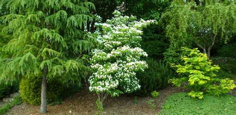 yard tree guide to different tree shapes for your yard today s