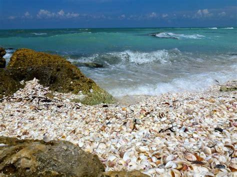 best beaches for seashells best shelling beaches west coast florida