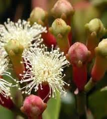 Alat Ukur Ph Tanah Yang Bagus tips budidaya tanaman cengkeh yang baik