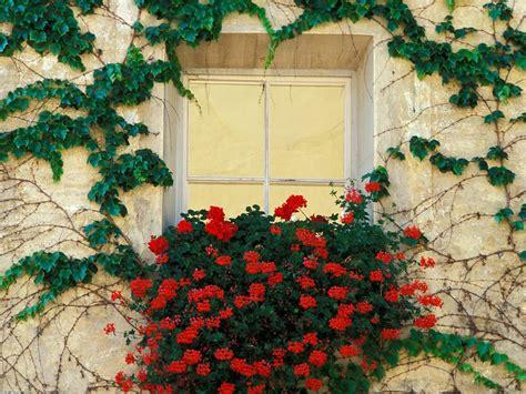 imagenes de jardines en ventanas la singular belleza y alegr 237 a de las ventanas con flores